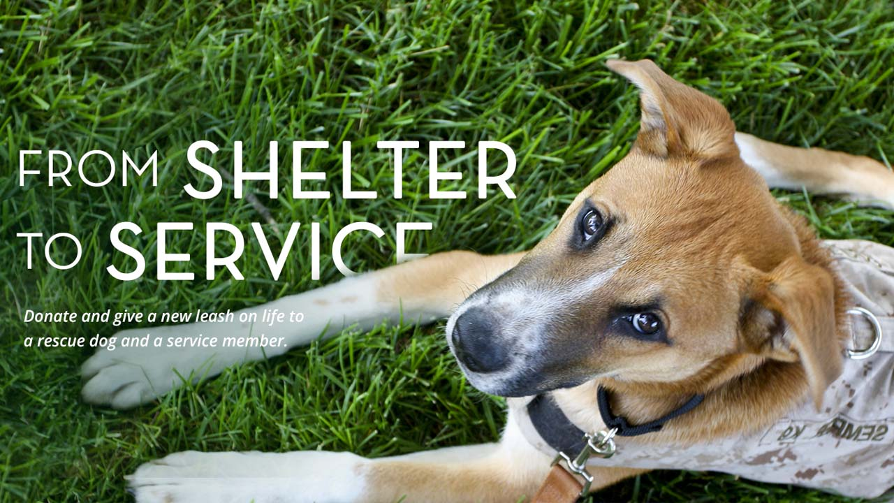 Shelter to Service