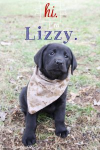 Semper K9s Lizzy Photo Small