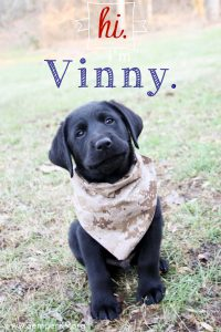 Semper K9s Vinny Photo small