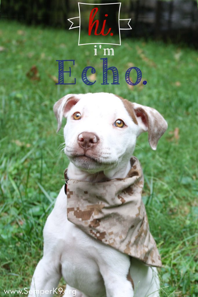 semper-k9s-echo-photo-small