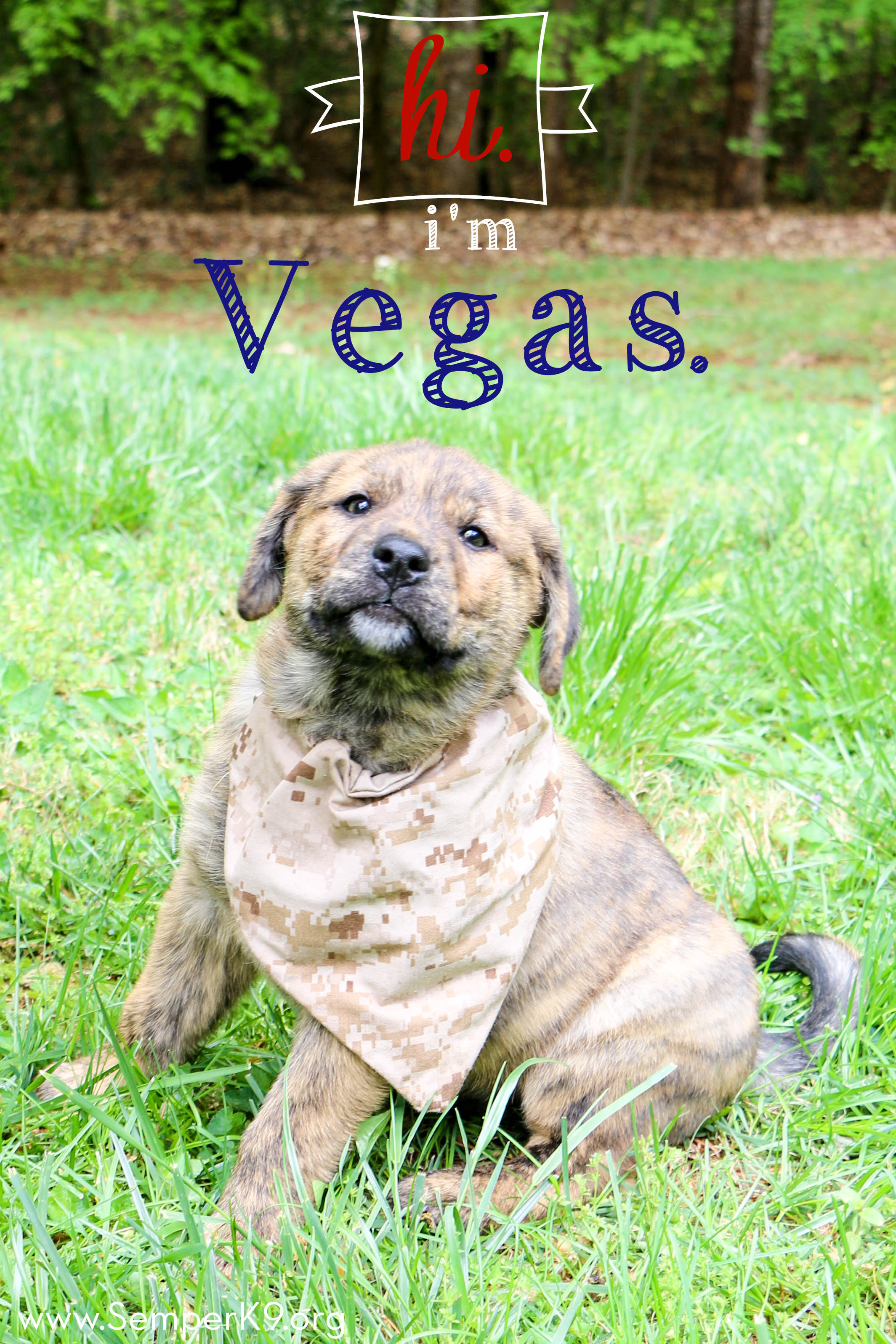 Semper K9s Vegas Photo