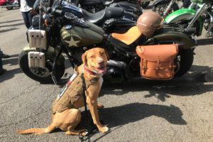 Semper K9 Poker Run for Veterans
