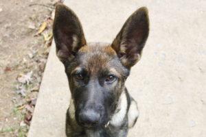 Timmy & Wayne - Semper K9 - Service Dogs for Veterans