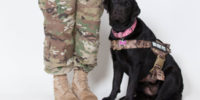 Service Dogs for Veterans Semper K9