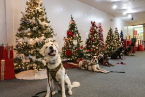 Semper K9 Festival of Trees